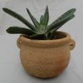 pot à plante en grès
